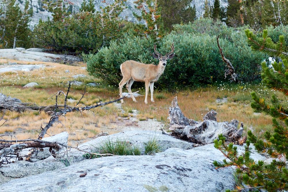 Camp 2 Deer